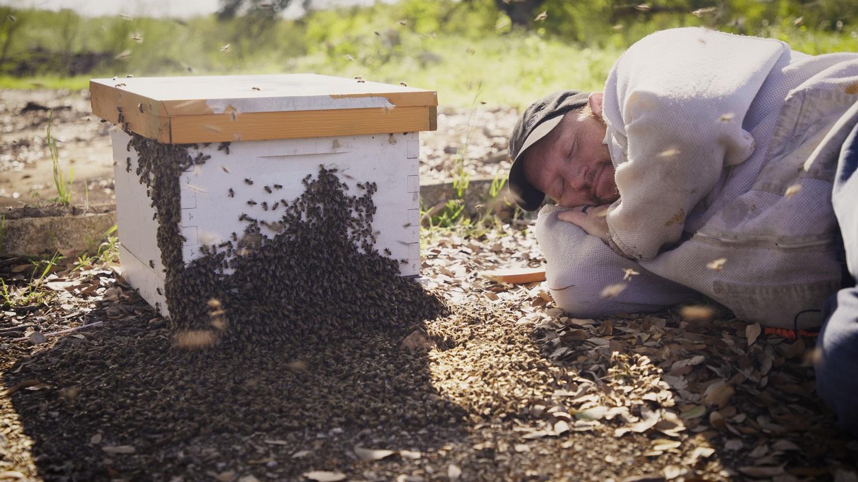 """""""În compania albinelor"""" pe Viasat Nature (din 4 iulie) - Interviu exclusiv cu Charlie Agar"""