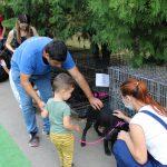 """""""Adoptă bucurie"""" în Parcul Izvor sau... """"măcar încercați!"""" (22.08.2021)"""