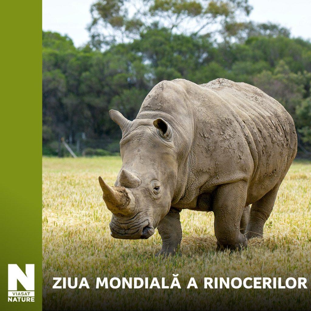 Ziua Mondială a Rinocerului (22.09)